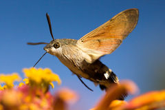Flying moth stock images