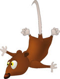Flying mouse Stock Photos