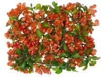 The flying orange bouquet Stock Photo