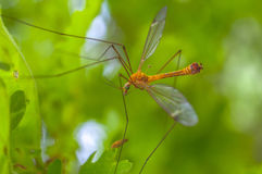 Flying orange insect Royalty Free Stock Images