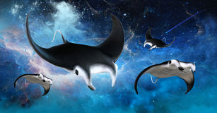 Flying Outer Space Manta Stingray Royalty Free Stock Photography