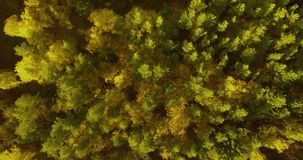 Flying over the autumn forest stock video footage