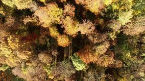 Flying over Autumn forest stock video footage