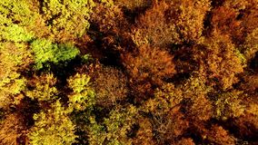Flying over Autumn forest stock video