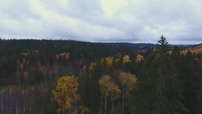 Flying over the autumn trees in the forest on the horizon blue sky with clouds stock video