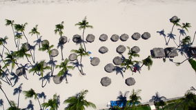 Flying over the beach. Palm trees sun, building houses stock video footage