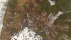 Flying over beautiful forest trees stock video footage