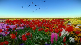 Flying over a beautiful garden with flowers of all colours stock video footage