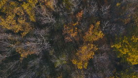 Flying over the beautiful sunny autumn forest trees. Aerial view stock footage