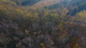 Flying over the beautiful sunny autumn forest trees. stock video