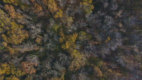 Flying over the beautiful sunny autumn forest trees. Aerial view stock video