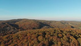 Flying over the beautiful sunny forest trees. Aerial camera shot. Landscape panorama stock video