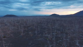 Flying over the burnt wood in the tundra. Aerial View. Flying over the burnt wood in the tundra stock footage