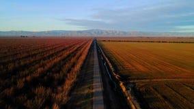 San Joaquin Almond Orchard stock footage