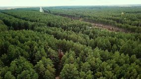 Flying over the coniferous forest and the road stock video
