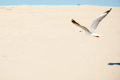 Flying over the dune Royalty Free Stock Image