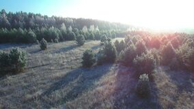 Flying over a fairytale romantic frozen forest background. Beautiful sunrise frost and snow on the grass and branches