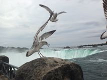 Flying over the falls Royalty Free Stock Images