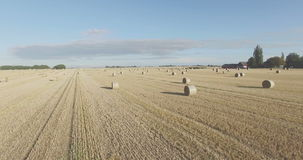 Flying over the field with round hay bales stock video