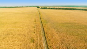 Flying over fields stock footage