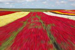 Flying  over a flower field Stock Photos