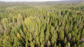 Flying over forest stock footage