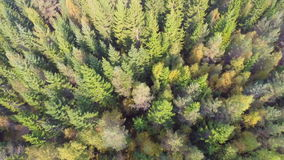 Flying over forest. Camera with top view flying above a large spruce forest at the autumn. Cinematic and film-like stabilized aerial video footage