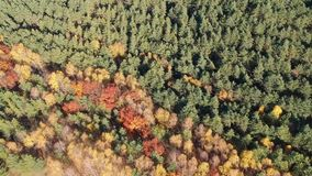 Flying over the forest stock footage