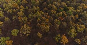 Flying Over Forest. Forest from Above. Flying over Magical Forest in the mountains. Beautiful view of nature. Traveling background stock video