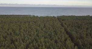 Flying over the forest stock video