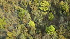 Flying over the forest landscape stock footage