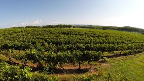 Flying over an france vineyard in the France stock footage
