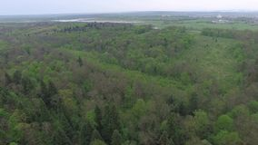 Flying over green deciduous forest with small glades, aerial view stock video footage