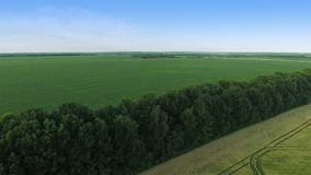 Flying Over Green Field. Aerial shot: Flying Over Big Green Field stock video