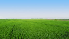 Flying over green field Stock Photography