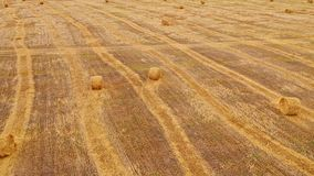 Flying over harvested field with collected hay bales. Landscape field meadow with hay bales after harvest. Aerial over stock footage