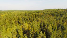 Flying over large forest in daylight Stock Photos