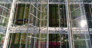 Flying over a large greenhouse with flowers, a greenhouse with a retractable roof, a greenhouse view from above, growing stock footage