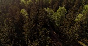 Flying Over Forest. Forest from Above. Flying over Magical Forest in the mountains. Beautiful view of nature. Traveling background stock video footage