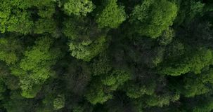 Flying over the mountain forest. stock video footage