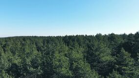 Flying over pine forest tree tops on sunny day. 4k stock footage
