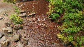 Flying Over Pure Mountain Stream. Yellow Leaves in the Water stock video footage
