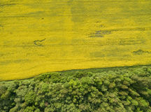 Flying over the rapeseed field with drone. Landsacape. Forest Royalty Free Stock Image