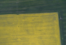 Flying over the rapeseed field with drone. Landsacape. Tractor fertilize wheat field Stock Photos