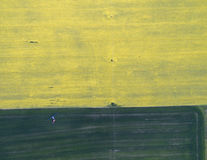 Flying over the rapeseed field with drone. Landsacape. Tractor fertilize wheat field.  stock image