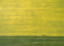 Flying over the rapeseed field with drone. Landsacape. Wheat Field Stock Images