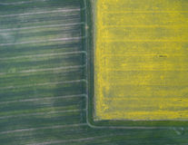 Flying over the rapeseed field with drone. Landsacape. Wheat Field Stock Photos