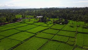 Flying over rice fields stock footage