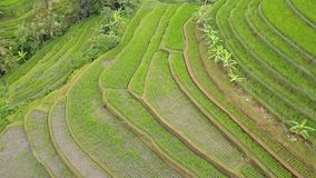 Flying over Rice Terraces. Aerial View stock footage