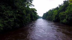 Flying over the river in the tropical jungle. The river in the jungle. The camera slowly rises over the rainforest River in the rainforest. Camera moving down stock video